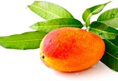 Mango met blad Stock Foto