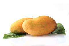 Mango na Białym tle Obrazy Stock