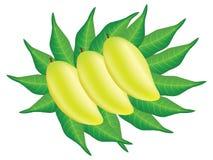 Mango. Royalty Free Stock Image