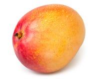 Mango one wet Stock Images