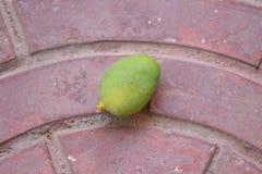 Mango op oppervlaktegrond Stock Fotografie