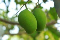 mango obraz royalty free