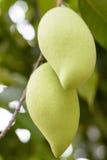 Mango pairs Stock Photo