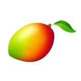 Mango rode geelgroene fruit geïsoleerde illustratie Stock Afbeeldingen