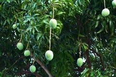 Mango-süße Frucht des Lebens stockfoto