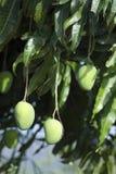 Mango's stock foto