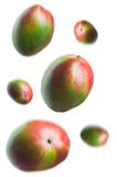 Mango's. One mango in focus with others falling around it stock photography
