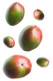 mango s Arkivbild
