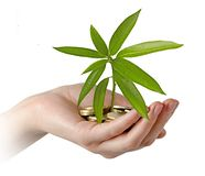 Mango sapling growing from coins. Mango sapling growing from euro coins royalty free stock images