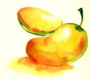 Mango with section illustration isolated stock photography