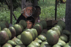 Mango sellers, Trinidad. In Trinidad (West Indies) people of East Indian and of mixed ancestry are a large proportion of the population. Mangos, here displayed Royalty Free Stock Photo