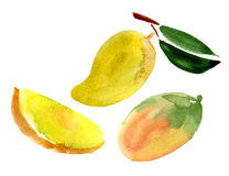 Mango set Stock Photos