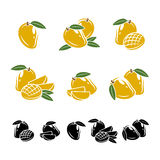 Mango set. Vector Stock Photography