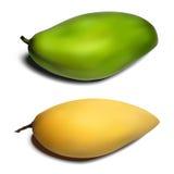 Mango set - yellow and green gradient mesh Royalty Free Stock Image