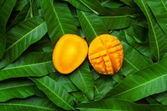 Mango and slice cut on green leaf background Stock Photos