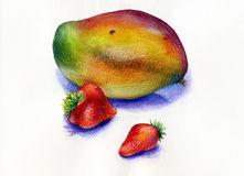 Mango and strawberries fruits. Big ripe mango and red juicy strawberries fruits wateercolor pencils tasty fruits Stock Photography