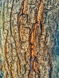 Mango tree bark abstract textures royalty free stock photos