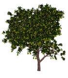 Mango tree - 3D render Royalty Free Stock Image