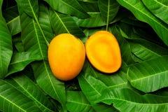 Mango tropical fruit on green leaf background Royalty Free Stock Image