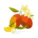 Mango und Blume auf weißem Feld Stockfotos