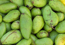 Mango verde Fotografie Stock