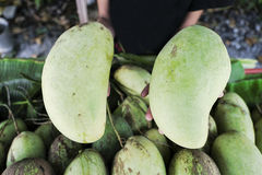 Mango verde a mano Fotografía de archivo libre de regalías