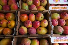 Mango w pudełkach fotografia stock