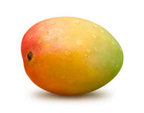 Mango with Water Drops Stock Images