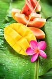 Mango Water Melon Papaya Melon Fruits Tropical Royalty Free Stock Photos