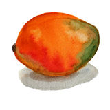Mango watercolor Royalty Free Stock Images