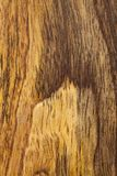 Mango wood bacground. Mango wood smooth board bacground with different colors of layers Royalty Free Stock Photo