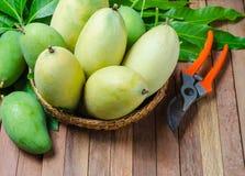 Mango on a wooden background stock photos