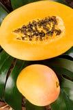 Mango y papaya Imagen de archivo libre de regalías