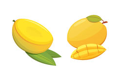 Mango yellow Fruit  Vector illustration. Ripe fresh mangoes Royalty Free Stock Photos