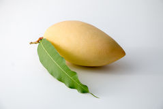 Mango. Yellow Mango, Thailand favorite fruit isolated on a white background Stock Photos