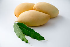 Mango. Yellow Mango, Thailand favorite fruit isolated on a white background Royalty Free Stock Images