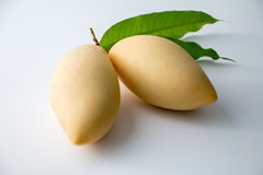 Mango. Yellow Mango, Thailand favorite fruit isolated on a white background Royalty Free Stock Photo