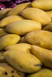 Mango yellow Royalty Free Stock Image
