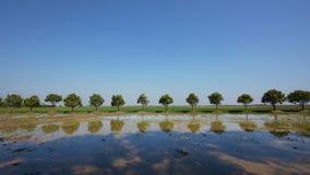 Mangobäume und Reisfelder in Kambodscha Stockbilder
