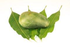 Mangobladeren op witte achtergrond worden geïsoleerd die Royalty-vrije Stock Afbeelding