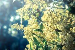 Mangoblumen, Weinleseartlicht. Lizenzfreies Stockbild