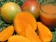 Mangoes-0963. Ripe magoes,whole,cut and juice royalty free stock images