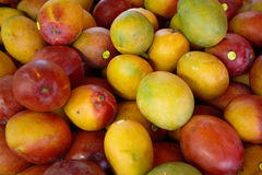 Mangoes. Background of ripe mangoes on display at farmers' market Royalty Free Stock Photo