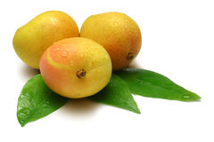 Mangoes Stock Photos