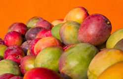 Mangoes. Close-up of a colorful bunch of ripe mangoes against a flat orange background Royalty Free Stock Images