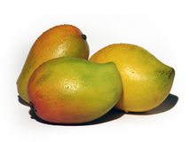 Mangoes Stock Image