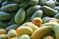 Mangoes. Ripe and green mangoes in piles Stock Image