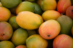 Mangoes background - mango fruit. Pile of fresh mango fruits closeup - mangoes background Stock Photo
