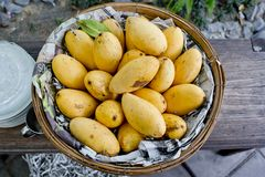 Mangoes in the basket Stock Image