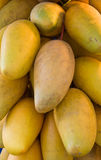 Mangoes by the bunch Royalty Free Stock Photos